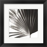 Framed Black and White Palm IV