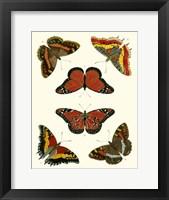 Framed Butterflies I