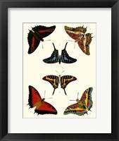 Framed Butterflies II