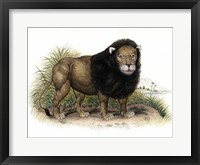 Framed Lion from India I I