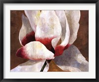 Framed White Cyclamen