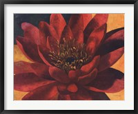 Framed Red Water Lily