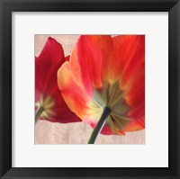 Joy IV Framed Print