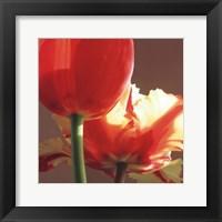 Soire I Framed Print