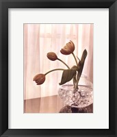 Window Light II Framed Print