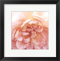 Heavenly Rose Framed Print