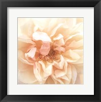 Promise Rose Framed Print