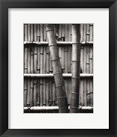 Framed Bamboo and Wall