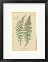 Framed Nature Printed Ferns