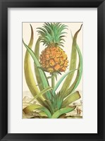 Framed Pineapple