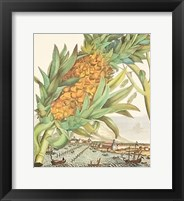 Framed Pineapple With Ships
