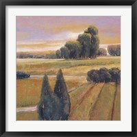 Framed Summer Cypress