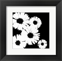 Framed Black/White Asters I