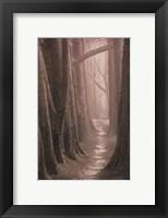 Framed Cypress Trail