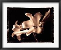 Framed Bermuda Lilies