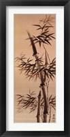 Framed Bamboo Forever I I