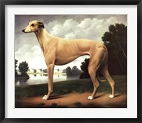 Framed Greyhound in a Parkland Landscape