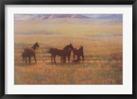 Framed Mares and Foals
