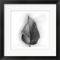 Framed Aspen Leaf in Snow