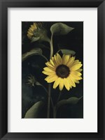 Framed Two Sunflower Stems