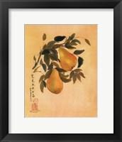 Framed Pears