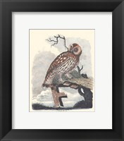 Owl in the Snow Framed Print