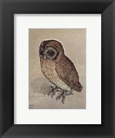 Framed Little Owl