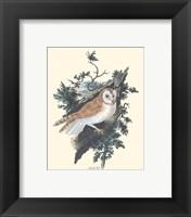 Owl in the Woods Framed Print