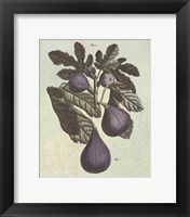 French Fruit Plate/Fig Framed Print