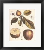 French Fruit Plate/Apple Framed Print