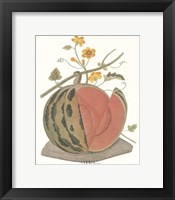 Melon - Watermelon Framed Print