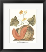 Melon - Persian Framed Print