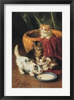 The Milk Dish Framed Print