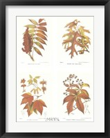 Framed Leaves (Set of Four)