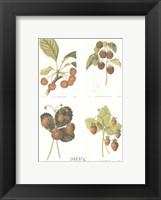 Framed Berries (Set of Four)