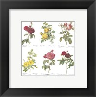 Framed Roses (Set of Six)