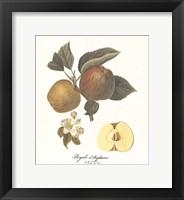 Framed Apple/Royale d'Angleterre