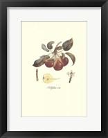 Pear/Bellifsime d'Ete Framed Print