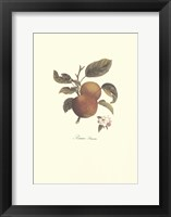 Apple/Pomme Princesse Framed Print