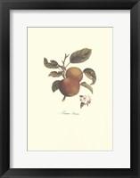 Framed Apple/Pomme Princesse
