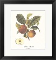 Framed Apple/Blanc-Michel