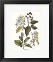 Shad Bush Framed Print