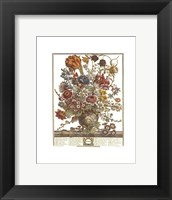 March/Twelve Months of Flowers, 1730 Framed Print