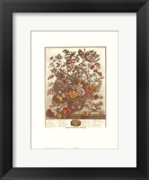 May/Twelve Months of Flowers, 1730 Framed Print