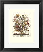 September/Twelve Months of Flowers, 1730 Framed Print