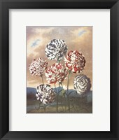 A Group of Carnations Framed Print