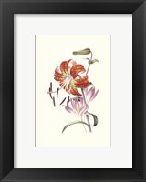Framed Flowers (Untitled) Tiger Lily