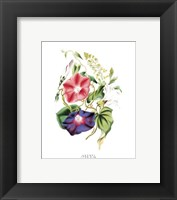 Framed Flowers (Untitled) - Morning Glory