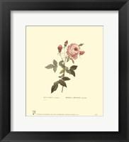 Framed Roses V
