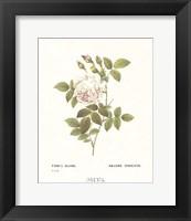 Framed Roses III